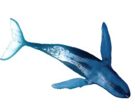 Whale2cutout2983.png